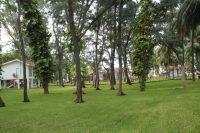 105-lawn-1024x683.jpg