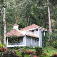 The Tall Tree Resort1