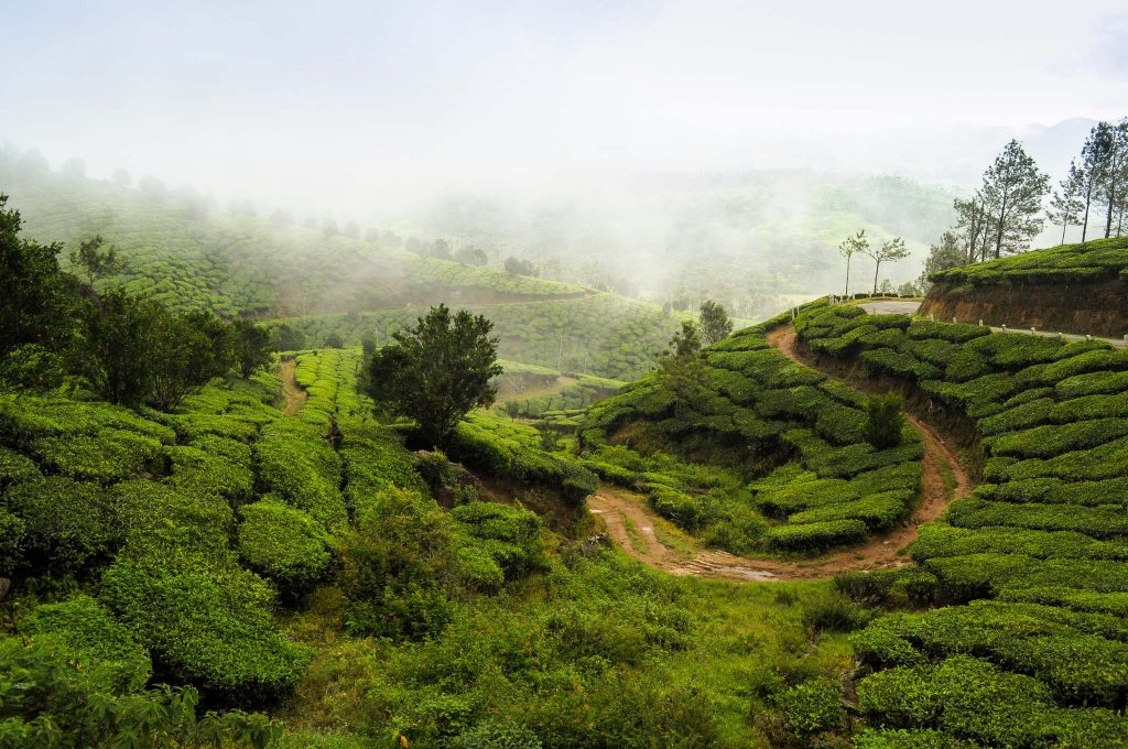 munnar-tourist-places-pictures1